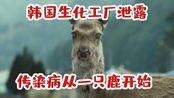 釜山行:韩国生化工厂泄露,传染病从一只复活的鹿开始,灾难来临