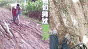 4.28《京东配送员日》-西南大件特集—在线播放—优酷网,视频高清在线观看