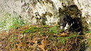 Wildes Deutschland S01E04 The Berchtesgaden Alps 2011 720p BluRay AC3 5.1 x264-D