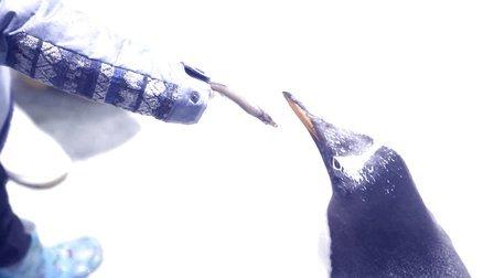 潮小孩·吉泡泡为奥运加油助威-《穿越南极》马随轩