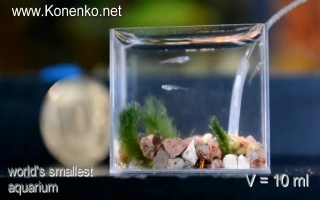 世界上最小的水族箱!