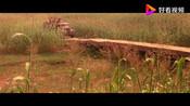 电影《红高粱》日本人的突然到来,打破了村子的宁静,村民们被无情压榨