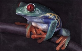 OY手绘·蛙 720P