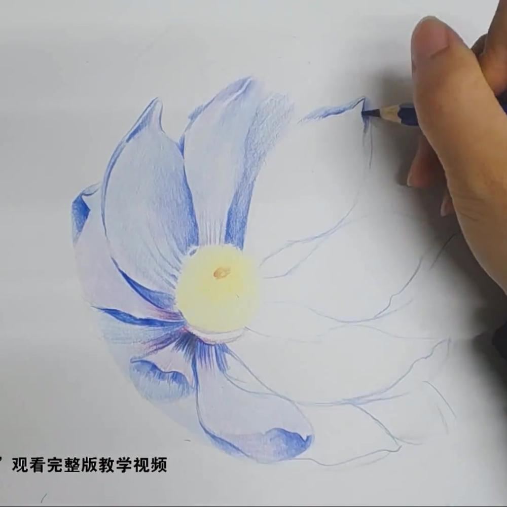 【秒学】2分钟画一朵充满仙气的昙花-彩铅手绘免费教学