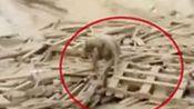 揪心!秘鲁夺命洪水肆虐 视频记录女子绝境求生