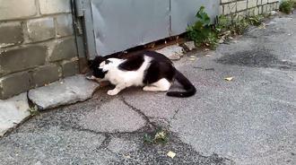 猫妈妈叼着孩子回家,门缝太小进不去只能由我来帮忙了
