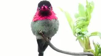 这是什么鸟啊!各种角度会变色