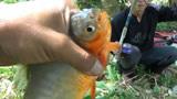 小水沟里全是小鱼,连上几条之后,还上条大的!