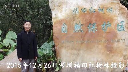 深圳红树林《鹿水洞》