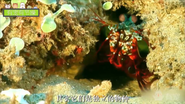 藏在海底的一拳超人