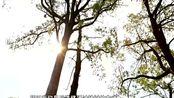 养成自己的小树!蚂蚁森林:1.22亿棵真树 168万亩荒漠沙地变成绿洲