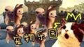 建造宠物城堡!哈士奇和小猪的乐园!【乐高世界】Ep15-单机游戏精彩视频-爱拍原创