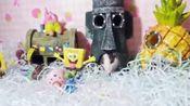 #宠物##仓鼠#哈哈:2017.4.16生日,品种:飞象耳正