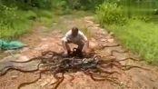 印度阿三开挂 阿三如何放生百蛇