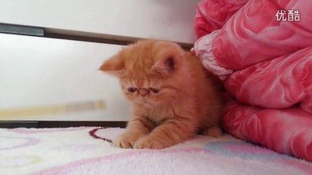 电影版红虎斑加菲猫dd