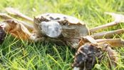 大闸蟹脱壳?听30年养蟹人讲述阳澄湖大闸蟹的生长秘密