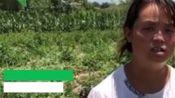 2000个西瓜一夜之间遭刀砍 农妇:良心不会痛吗