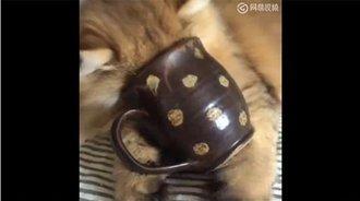 喵星人:我怎么进不去这个杯子呢