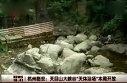 """杭州临安:天目山大峡谷""""天体浴场""""本周开放"""