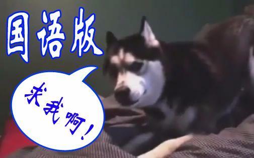 【国语版】二哈:你求我啊!!!