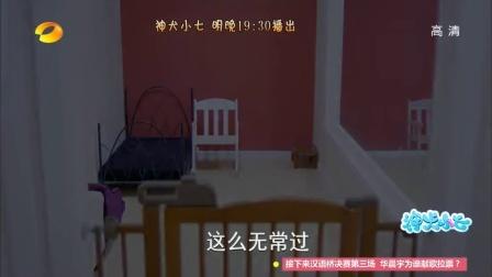 神犬小七 tv版预告 11