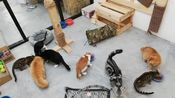 【8只猫的合租日记】Date: 18th Jan. 2020