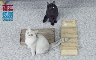 居家小物秒变猫抓板【举起爪儿来】