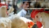 台湾爆发禽流感疫情 香港禁止从台湾进口禽蛋