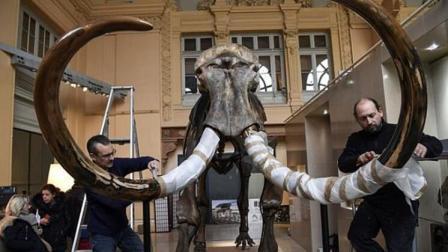 猎人发现一万年前猛犸象骨架 如今卖出了440万