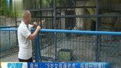 """""""9岁女孩遛老虎""""视频网络爆红"""