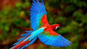 机灵的金刚鹦鹉