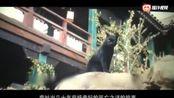 几分钟看完《妖猫传》你有怎样的执着,就过怎样瞪活!
