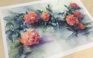 水彩教程 · 花卉【玫瑰】