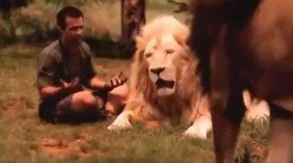 佩服!男子爬在狮子的背上,我从未见过如此勇敢之人