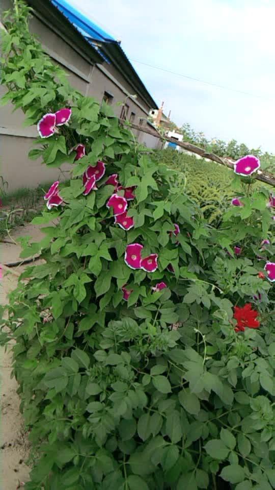 满院花香……