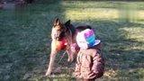 精选搞笑-20131021-保姆德国牧羊犬细心照看小北鼻 一起快乐的成长