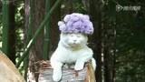 搞笑超级 三七粉 www.chinahhsl.com