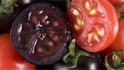 买西红柿回家变紫 变色西红柿