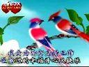 单身歌(花鸟图)