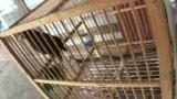 腾讯播客-咬人的牡丹鹦鹉