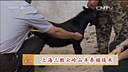 上海三胜EM菌露 云岭山羊养殖技术