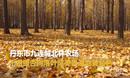 【辽宁】醉美秋色!航拍千亩金色银杏林 落叶满地让人流连