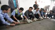 """商铺""""天花板""""掉下大蟒蛇:长约3米重40斤,藏身长达10年?"""