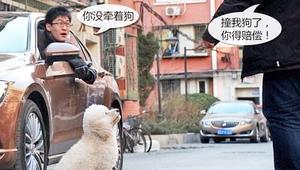 开车撞到狗要赔钱吗?这几点不弄清楚,遇到你就要吃大亏