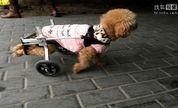 小狗装上滑轮车.《囧事连连看》第35期