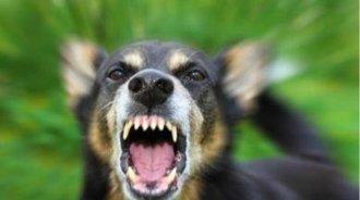 保安喂养流浪狗2年,忘带食物被12条恶犬咬死分尸