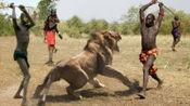 号称丛林之王的狮子为啥害怕马赛人?要不是镜头拍下,你敢相信