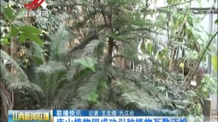 庐山植物园成功引种植物瓦勒迈松 江西新闻联...
