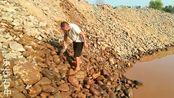 老何捡奇石可是认真的,每一块石头都想把它冲洗的干干净净