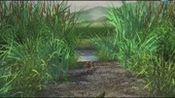 青蛙总动员:人类建设污染青蛙家园,迫使青蛙举族搬家